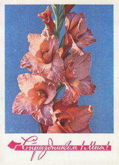 Gladiolus, photo by I. Dergilyov (1969)