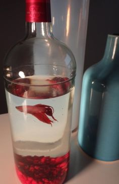 Wine Bottle Betta Fish Tank Aquarium...cute for the kitchen. by ajct