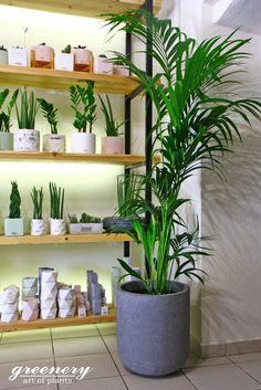 Άλλαξε την εικόνα του χώρου σου με ένα φυτό! #greenery #plants #planters #decoration