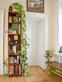 Single tall wood bookshelf with plants