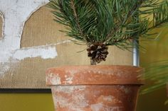 pine branch decorations