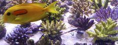 http://www.acuaristica.com/blog/2012/03/furiousfish-nos-discrimina-y-nos-manda-sus-peores-piezas/