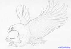 How to Sketch an Eagle In Pencil, Draw an Eagle Bird, Step by Step ...