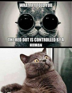 Collection of Funny Cat Memes 2019 Animal Memes, Funny Animals, Cute Animals, Animal Humor, Animal Sayings, Animal Captions, Crazy Cat Lady, Crazy Cats, Cat Memes