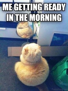 Gym Ready For Gym Hours Followme Aninspiring Healthy Lifestyle Healthy Lifestyle Inspiration Awesom Funny Good Morning Memes Morning Memes Gym Memes