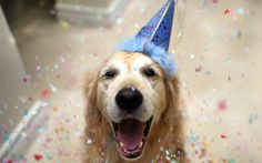 Celebrate: Two Delicious Dog-Friendly Birthday Cake Recipes To Wow Your Pooch