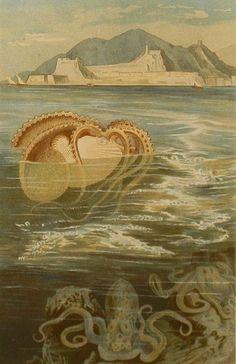 savateuse:    Paper Nautilus Chromolithograph 1890