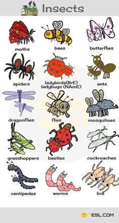 insects vocabulary Insect Names! List of insects and bugs with ESL pictures, examples in English. Learn these names of insects illustrated with interesting images to improve your vocabulary in English, especially for kids. English Verbs, Learn English Grammar, English Writing Skills, English Vocabulary Words, English Phrases, Learn English Words, Learning English For Kids, English Lessons For Kids, Kids English