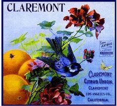 Vintage crate label for Claremont citrus fruit