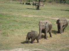 Elephant Nature Park Thailand