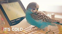 Pet Bird Cage, Bird Cages, Cockatiel, Budgies, Chilly Weather, Beautiful Birds, Parrot, Cute Animals, Creatures