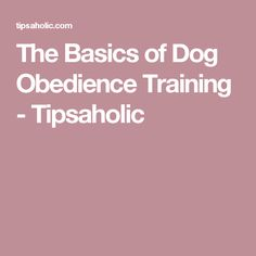 The Basics of Dog Obedience Training - Tipsaholic