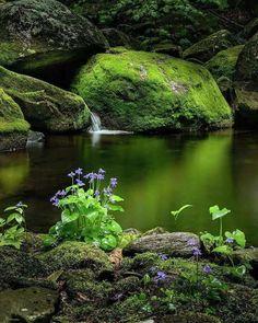 Delicate purple flowers, mossy rocks, water's edge