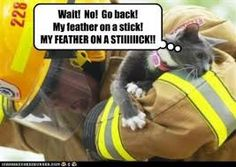 Image result for firemen rescuing cats