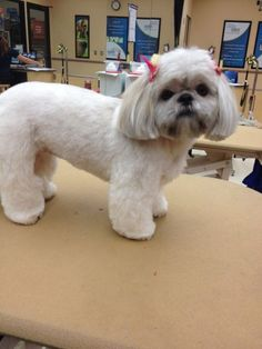 nice 15 Very Interesting and Funny Dog Haircuts