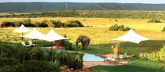 Private game reserve, Eastern Cape, South Africa