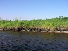 Bayou Scenery | Swamp scenery