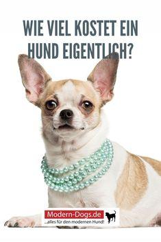 Bei der Anschaffung eines Hundes sollte berücksichtigt werden, dass das mit einigen Kosten verbunden ist. Nicht nur der Hund an sich wird etwas kosten, sondern auch die Ausstattung, Versicherungen, Tierarztgänge, Futter und vieles mehr. In diesem Beitrag findest du eine detaillierte Übersicht der anfallenden Kosten. #hunde #hundehaltung #lebenmithund #moderndogs Drawings, Dogs, Modern, Dog Care, Pooch Workout, Animales, Collection, Education, Trendy Tree