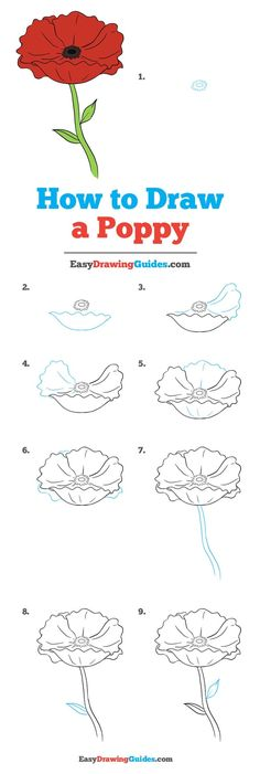 How to Draw a Poppy - Really Easy Drawing Tutorial - - Learn to draw a poppy. This step-by-step tutorial makes it easy. Kids and beginners alike can now draw a great looking poppy flower. Easy Drawing Tutorial, Flower Drawing Tutorials, Drawing Tutorials For Beginners, Flower Sketches, Flower Tutorial, Drawing Flowers, Painting Flowers, Flower Drawing For Kids, Beginner Drawing Lessons