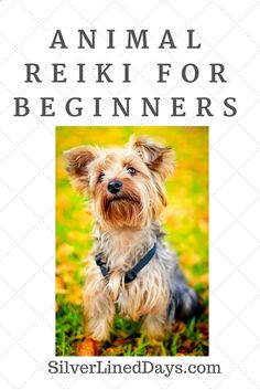 Reiki can be used on every living thing for healing, personal development, deep relaxation and stress relief. Animal Reiki is an increasingly popular niche as more Reiki practitioners and vets are adding Reiki to their practice. If you are wondering about how Reiki can be applied to your pet in need of healing, ... reiki healing | energy healing | holistic healing | chakra healing | law of attraction | spirituality | lightworker