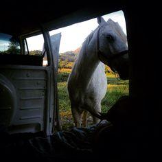 Volkswagen bus horse power