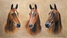 THREE BAY MARES, pastel on pastel card by Ali Bannister. Commissioned as a 60th birthday present. The three mares are Molly, Lily and Abby. Molly is a thoroughbred x polo pony, Lilly is a Mecklenburg and Abby on the right is a thoroughbred. For limited edition prints and information on commissions see: www.alibannister.com