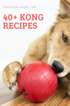 In this guide, we'll share exactly what a KONG is, along with over 40 KONG recipes you can use to keep your dog entertained for hours. Animal Nutrition, Pet Nutrition, Kong Dog Toys, Dog Enrichment, Outside Dogs, Puppy Treats, Homemade Dog Treats, Dog Care Tips, Dog Hacks