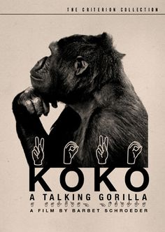Koko, a talking gorilla with sign language