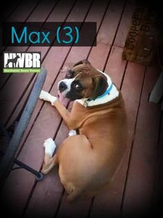 Max 3 I decided on my furever home today lots of playmates