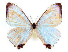 Butterfly sex with sheri hollis jones