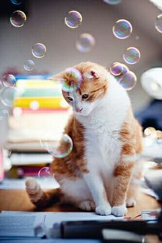 Bubbles #cat