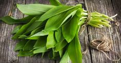 What the Heck are Ramps? - Page 3 of 3 - Farmers' Almanac Vegetable Garden, Garden Plants, Wild Ramps, Wild Onions, Farmers Almanac, Wild Garlic, What The Heck, Caraway Seeds, Garlic Recipes