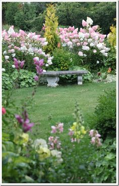 glorious garden in pink with paniculata hydrangea and cement bench...