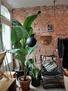 Mes bonnes adresses déco / Amsterdam / Photos Atelier rue verte / Amsterdam, Rue Verte, Deco, Loft, Concept, Boutique, Plants, Photos, Store