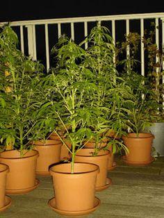 Baby Boomer Retirement: Medical Marijuana Pros and Cons
