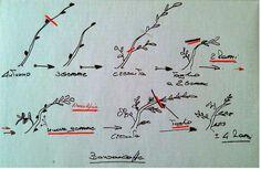 Evoluzione Bonsai : E.V. - FORUM BONSAI LODI - BONSAI CAFE' - PRUNING TARGETED OF DECIDUOUS TREES - step 1
