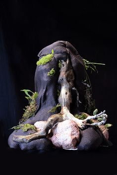 Hygrolon stump by Mikaels orchids - Back for now, via Flickr