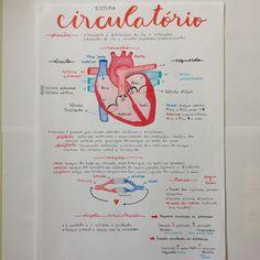 Sistema Circulatório ❤️{ #biologia x #sistemas x #sistemacirculatorio x #coracao x #sangue x #vasossanguineos x #studies x #studygram x #estudos x #enem x #vestibular }