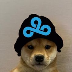 See more 'Dogwifhat' images on Know Your Meme! Doge, Funny Animals, Cute Animals, Famous Dogs, Hypebeast Wallpaper, Cloud 9, Cartoon Wallpaper, Dog Memes, Shiba