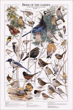 Birds of the Garden: Winter II Chart
