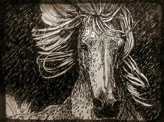Horse sketch two
