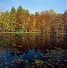 Fall in Indiana - a classic photo. www.discoveramerica.com