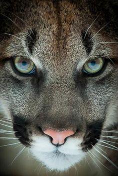 serwis randkowy cougar cubs szybkie randki tureckie