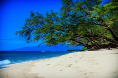 Maui. I'm pretty sure we spent several afternoons under that tree.