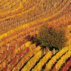 Ну мы собрались и начинаем. Сначала Южная Моравия с холмами бесконечными виноградниками затем озера и горы Зальцкаммергута. #фототур #moravia #czech #southmoravia #travel #phototravel #phototour #autumn #fall #заосеньюпопятам #frameway by vvtrofimov Ну мы собрались и начинаем. Сначала Южная Моравия с холмами бесконечными виноградниками затем озера и горы Зальцкаммергута. #фототур #moravia #czech #southmoravia #travel #phototravel #phototour #autumn #fall #заосеньюпопятам #frameway