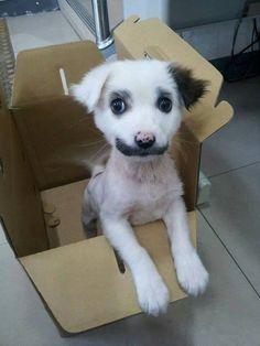cão de bigode Filhote com bigodes naturais vira celebridade virtual