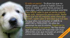El Campito Refugio Si estás de acuerdo hace click en compartir https://www.facebook.com/photo.php?fbid=10153688160630224&set=a.303858495223.329167.303147460223&type=1