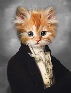 Cute Animal Memes, Funny Animal Pictures, Cute Animals, Custom Dog Portraits, Pet Portraits, Portrait Renaissance, Costume Chat, Photo Portrait, Cat Posters