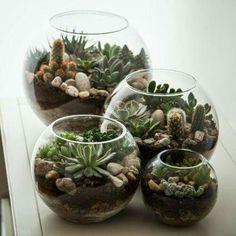 cactus and succulent terrarium .