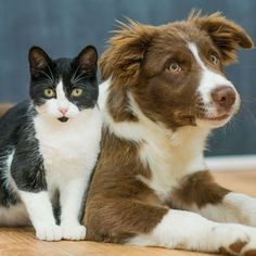 Dogs are smarter than cats, study finds - ABC News Card Tattoo, All About Cats, Dog Owners, Cat Day, Cats And Kittens, Cats Of Instagram, Your Pet, Cat Lovers, Dog Cat
